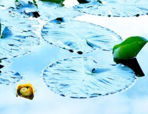 Comment protéger ses plantes de bassin en hiver ?
