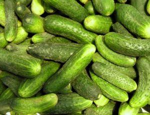 concombre semer cultiver et r 233 colter des concombres pratique fr