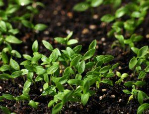 Connaitre et améliorer la terre du jardin
