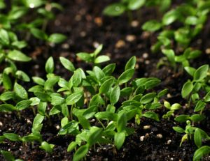 Reconnaître la terre de son jardin