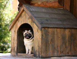 Construire une niche pour son chien : les critères importants