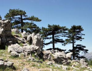 Corse : notre sélection de lieux incontournables