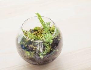 Créez votre propre terrarium !