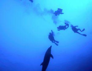 Palanquée de plongeurs en compagnie d'un dauphin