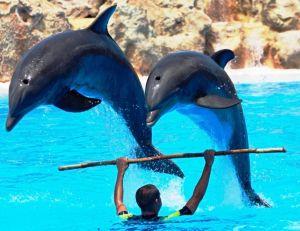 Spectacle avec des dauphins