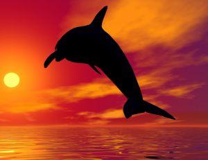 Représentation d'un dauphin dans le coucher du soleil