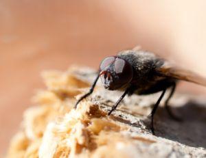Comment se débarasser des mouches ?