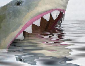 Reconstitution d'un requin blanc