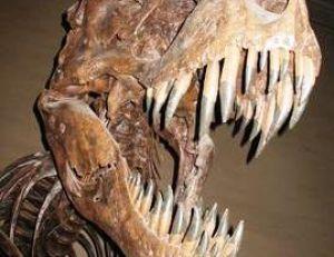 Mâchoires de tyrannosaure