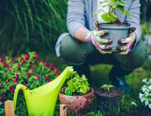 Développement personnel : les bonnes raisons pour jardiner/ iStock.com - AleksandarNakic