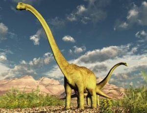 Reconstitution d'un diplodocus
