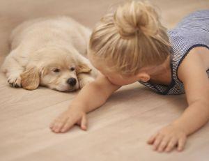 Les chiens bonifieraient la santé des enfants