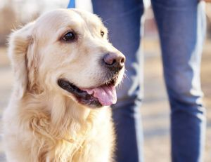 La panoplie des émotions du chien est bien plus complexe qu'on ne l'imagine