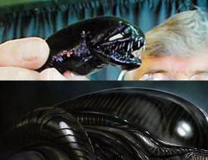 En haut le dragonfish, en dessous l'Alien imaginé par H.R. Giger...