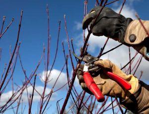 Élagage d'arbres : conseils pour bien choisir