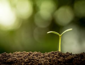 Engrais naturels, chimiques et terreau : conseils d'utilisation et composition