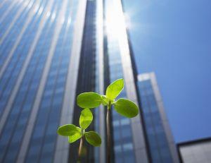 Entreprises face au développement durable