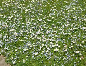 Entretenir et rénover sa pelouse