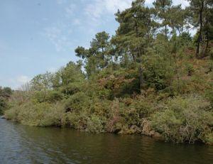 Un étang poissonneux