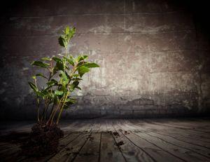 Faire pousser des plantes d'intérieur dans une pièce exposée à l'ombre
