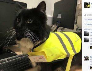 Le chat de la gare d'Huddersfield est devenu une véritable légende sur les réseaux sociaux