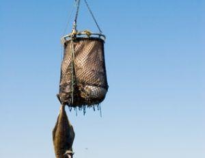 Un flétan d'une bonne centaine de kilos pêché en Alaska