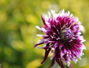 Travaux de jardinage en août