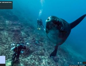 Explorer les fonds marins avec Google Street View, c'est dorénavant possible - copyright Google