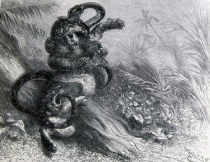 Anaconda... et anacondas
