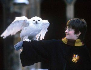 Harry Potter à l'école des sorciers © Warner Bros