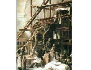 Première reconstitution d'un iguanodon, Belgique 19ème siècle