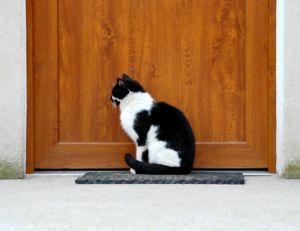 Installer une chatière