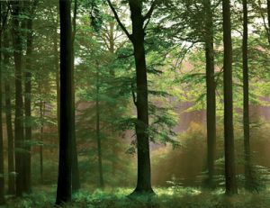 Défiscaliser grâce aux forêts