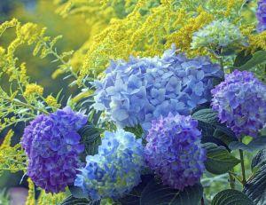 Des idées pour un jardin bleu