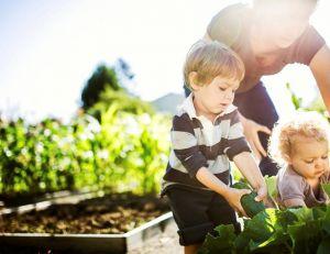 Pesticides et insecticides sont à bannir, au jardin... - iStockPhoto
