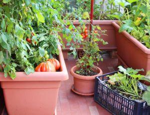 Jardin : qu'est-ce que la culture hors-sol ? / iStock.com -ChiccoDodiFC