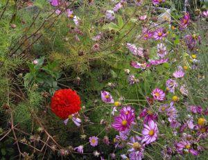 Le jardinage naturel