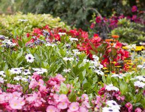 Que faire dans le jardin au mois de juillet ?