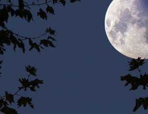 Bien jardiner avec la lune