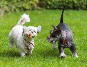 Choisir son jeu pour chien