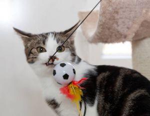 Conseils pour choisir les jouets pour son chat