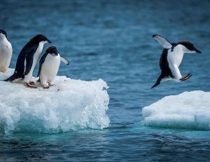 L'Antarctique va accueillir le plus grand sanctuaire marin du monde