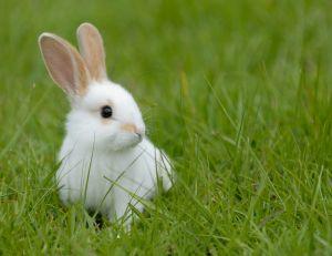 Adopter un lapin : une bonne idée ?