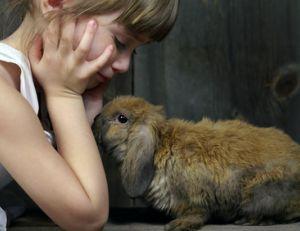 Rendre propre son lapin