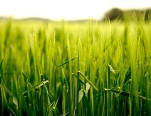 Les céréales complètes : source de vitamines et de sels minéraux