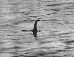La soi-disant photo de « Nessie », est-ce une preuve suffisante ?