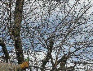 Les maladies des arbres arbre luexpert les traitements - Traitement arbres fruitiers avec bouillie bordelaise ...