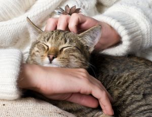 ma/maladies-transmises-animaux.jpg