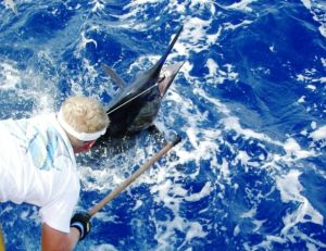 Capture d'un marlin