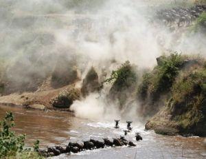 La traversée des rivières lors de la migration